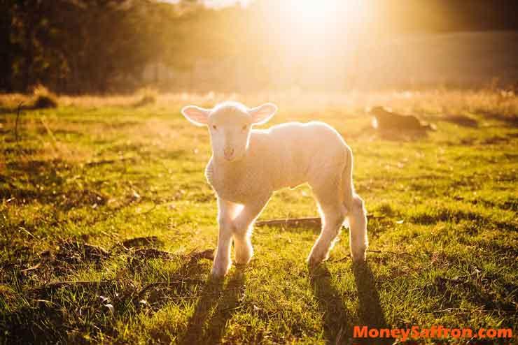 Animal Farming Business
